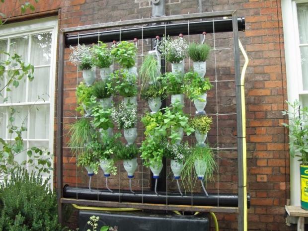 Vườn treo mini từ vỏ chai