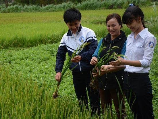 Phú, Hằng và cô Bích bên ruộng lúa thí nghiệm dùng thảo mộc trừ sâu.