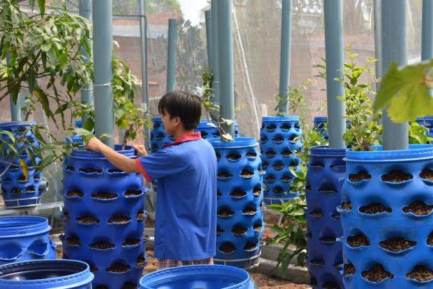 Tháp xử lý rác thải hữu cơ kết hợp trồng cây nho.